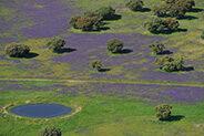 Aerial image Espiritu Santo area, dehesa Salamanca Region, Castilla y León, Spain