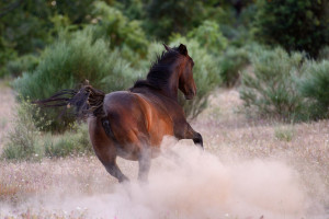 Wild horses are reshaping the landscape in a way that benefits a wide range of local flora and fauna.