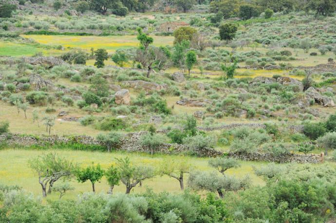 Faia Brava reserve, Côa valley, Portugal