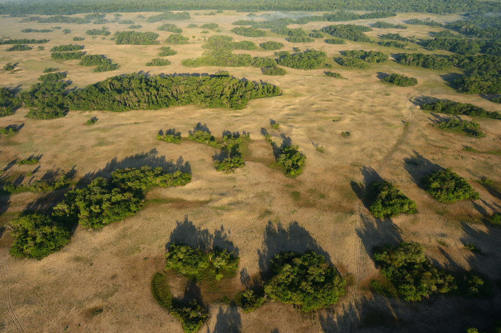 Aerial over Letea forest in the Danube Delta rewilding area in Romania.
