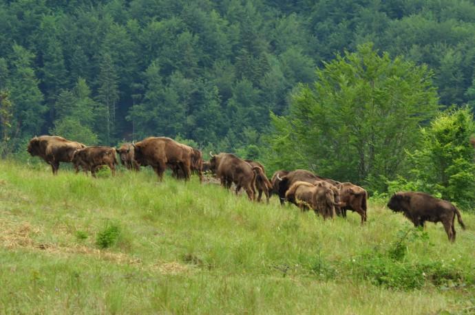 http://www.rewildingeurope.com/wp-content/uploads/2014/07/DSC_1086-690x458.jpg