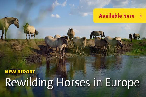 Solvin Zankl / Rewilding Europe