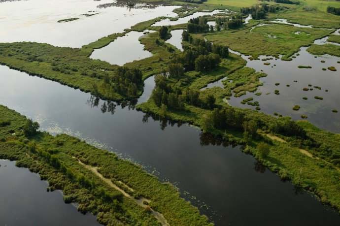 Natural disturbance processes (also just known as natural processes) are naturally occurring ecological processes that significantly disrupt the ecosystem, giving it a fresh start.
