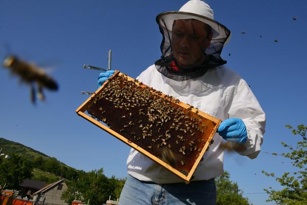Prize-winning bee keeper Sanjin Žarković at his apiary in Melnice, located in the Velebit Mountain rewilding area in Croatia.