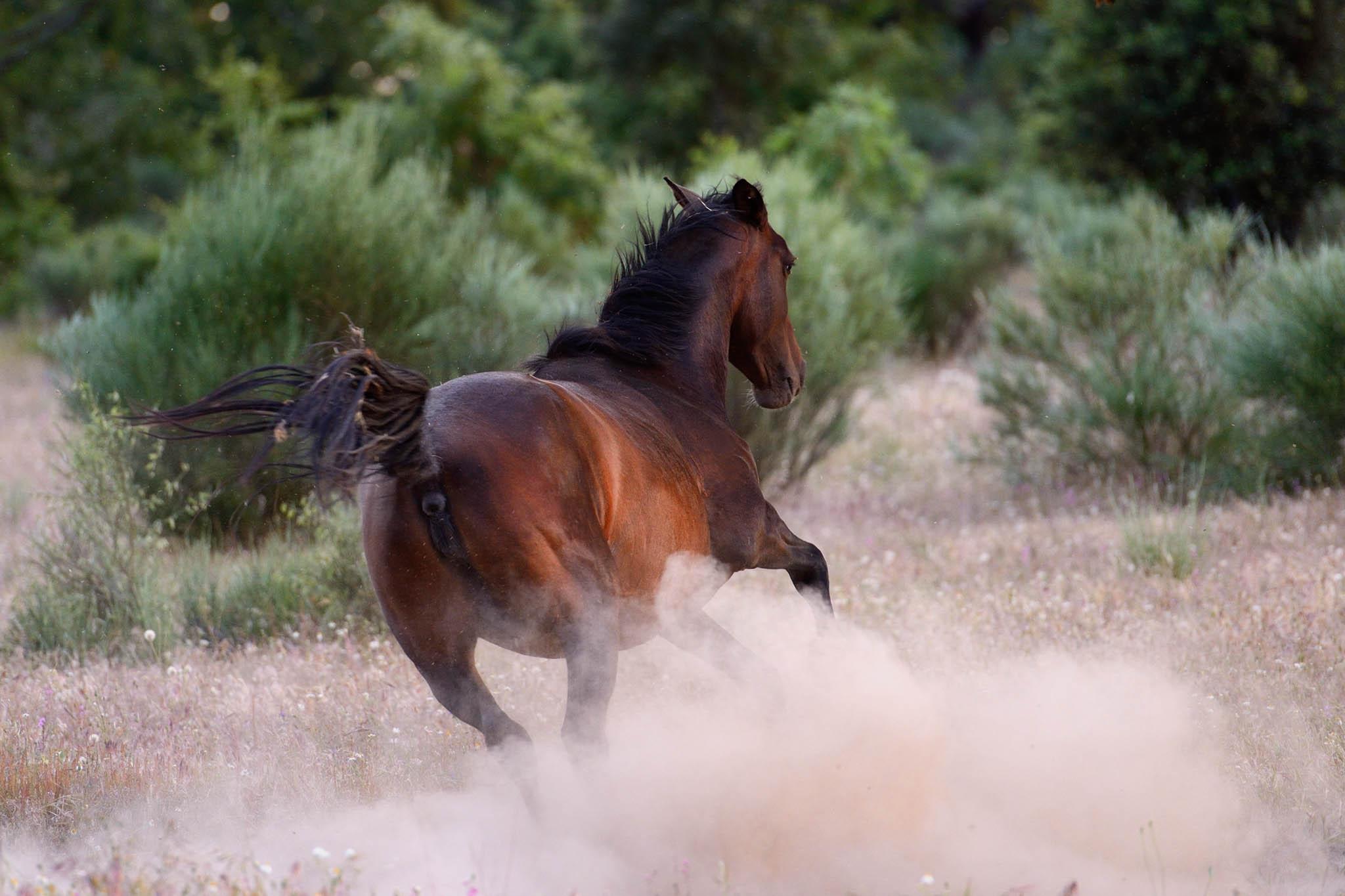Wild Retuertas horses in the Western Iberia rewilding area