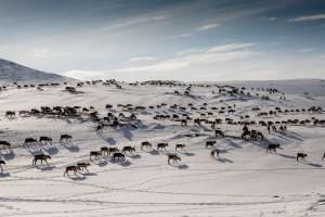 Reindeer herding activities are part of Lapland's ancient and unique natural-cultural landscape.