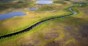 Several of Europe's wildest rivers run through northern Sweden's Lapland rewilding area.
