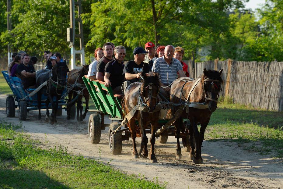 Horse wagon trip, Danube Delta, Romania