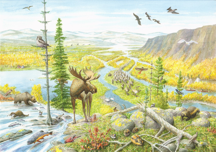 Rewilding Lapland Artist impression of a vision