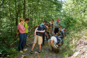 Fieldwork by researchers and students tracking bison in Southern Carpathians rewilding area.