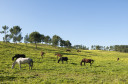 Natural grazing by free living horses in Quinta do Pisão, part of the Sintra-Cascais Park, Natura 2000 site, Portugal.