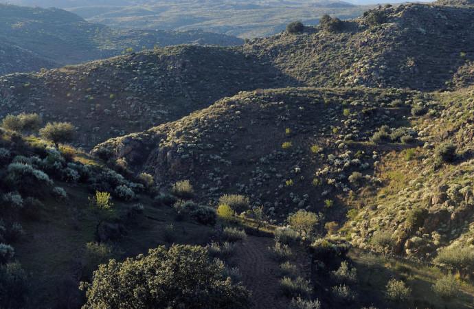 Land abandonment in the Faia Brava reserve, Western Iberia rewilding area, Portugal.
