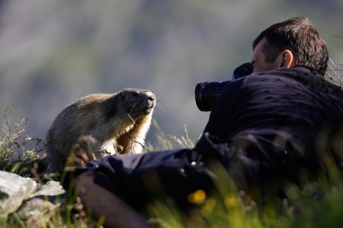 You don't have to make a wild Alpine Marmot pose for you, just post your best wildlife photo on your Instagram feed and tag it with #ReWild4Wildlife and #WorldWildlifeDay.