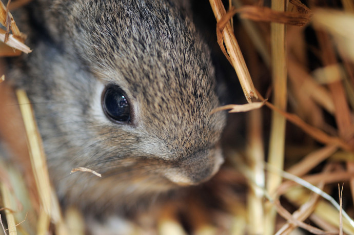 Tom Verhoeve's research revealed that European rabbit populations in Western Iberia haven't changed significantly over time. However, more work is needed to boost rabbit numbers.