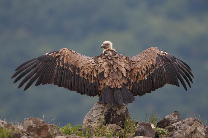 Held annually on the first Saturday of September, International Vulture Awareness Day celebrates the natural splendour of vultures.