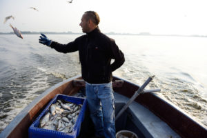 If implemented, Poland's inland waterways programme would reduce the ability of the rivers involved to clean themselves. This would negatively impact fish stocks, fish-eating bird species and tourism.