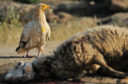 Rewilding Europe, which has already adopted the Circle of Life approach in its rewilding areas (by enabling wildlife comeback and reintroducing herbivores), is now working to scale up the project across Europe by promoting best practice, fostering dialogue and encouraging collaboration.