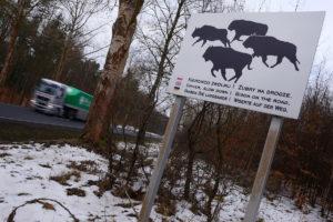 Road sign alerting drivers about European bison in Drawsko region, Western Pomerania, Poland.
