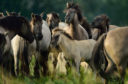 "The European Wildlife Bank ""lends"" herds of wild herbivores, such as horses, bovines and bison, for reintroduction into Europe's natural landscapes."