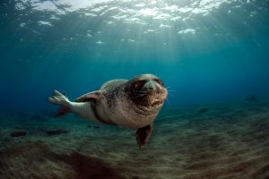The endangered Mediterranean monk seal is thought to frequent the waters of Kalamos and Kastos.